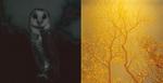 ソフィー・リケット -AUDITORIUM and recent photoworks-