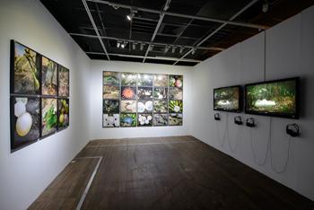 Janaina Tschäpe - installation view of